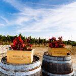ポルトガルワインの愛飲家が注目。ダン地方の新風マグナム社とは?