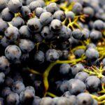 ポルトガルワインのダン地方をもっと知りたくなる5つのポイント