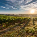 ポルトガルワインの産地。世界で評判の5リージョンとは?