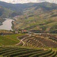 ポルトガルワイン全産地14リージョン。どこよりも詳しく解説!